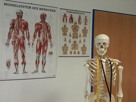 『基礎機能解剖学セミナー』開催します!