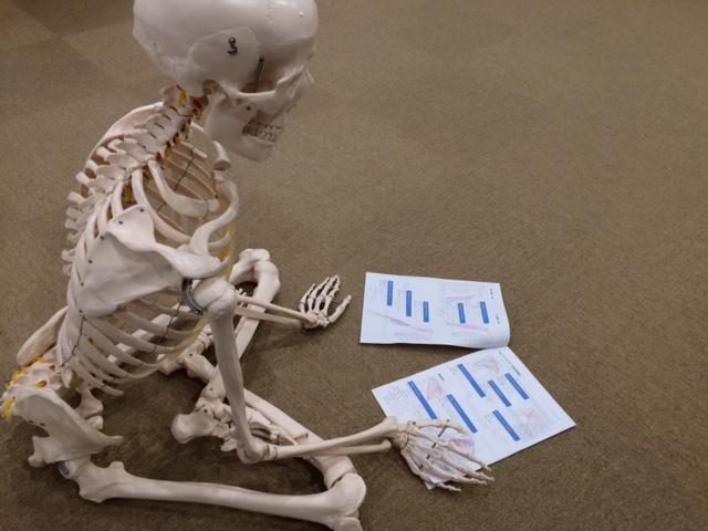 「基礎機能解剖学勉強会③ 下肢・体幹編」のお知らせ♪