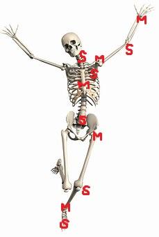 体の仕組み ~関節の役割~